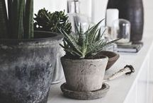 Planty Love / Cactus, Succulent, Fern, Oh My!  / by CRAFTED | DIY+HANDMADE + INTERIORS