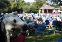 """Just Doggin' Around / Duck is one of the """"Top 10 Most Dog-Friendly Beach Towns"""" in the United States.  It is the only one on the east coast.  Visit, http://www.townofduck.com/pets/ for all the details!"""