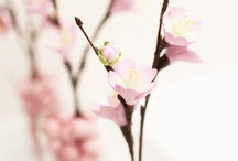 Cherry Blossom Theme Wedding