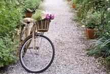 Bikes / by Michelle Eleanor