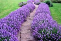 In the Garden: Flowers