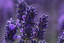 Flowers, Trees, Plants / by Bridgit's Bell