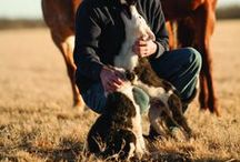 Land's Best Friend / by The Land Report Magazine
