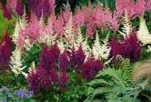Shade Gardens Grow Too / Plants and ideas for a garden that receives just enough light to grow some of these beauties.
