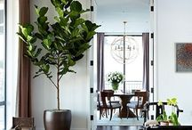 It Grows in the House / This board is the envy of houseplants that I would love to have!
