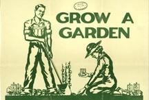 Growing Veggies and Herbs