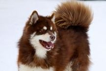 My future dog / Dog possibilities for Mink household