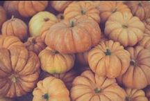 Pumpkins / Zucche violine, Zucche turbante, zucche ornamentali, zucche halloween, zucche chioggia, riosotti e tortelli, pumpkins, halloween pumpkins, pumpkin, calabazas, calabazas de halloween, calabaza, pampoene, pampoene halloween, pampoen, kungull, القرع، والقرع هالوين، اليقطين , balqabağa, Halloween Pumpkins, balqabaq, kalabazak, Halloween kalabazak, kalabaza, гарбузы, усіх Святых гарбузы, гарбузы, bundeve, halloween bundeva, bundeva, carabasses,, citrouilles, citrouilles d'Halloween, la citrouille