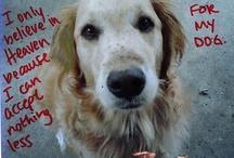must love dogs / by Cheryl Sambataro