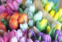 My Favorite Things - Flowers