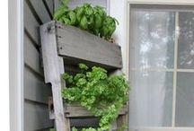 Farmgirl Gardens / by kalanicut