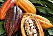 Cacao Sustainability / by ConfectionLink