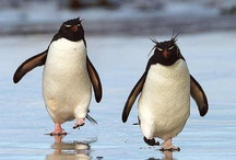 Penguins / #Penguins are super social...just like us! :)