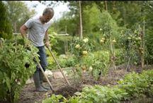 Entretien naturel du jardin / 5 gestes simples pour un jardin vivant. Préparer le sol en respectant la terre, nourrir, pailler, économiser l'eau et recycler les déchets sont autant de gestes qui permettent aux plantes de s'épanouir dans un sol fertile et vivant.