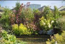 Une haie vive pour un jardin vivant / Composée de plusieurs variétés d'arbustes, la haie vive permet de créer un véritable écosystème dans le jardin, offrant un merveilleux refuge à la faune (abeilles, oiseaux,  hérissons, etc...)