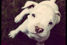 For dog lovers----I love you Skye! / My Dog