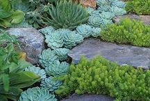"""California Garden / """"Brown is the new green"""".  With the ongoing drought in California, we need practical yet beautiful ways to deal with our dying lawns.   / by Kirsten Reilly"""