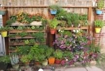 Gardening / by Clarissa Horner