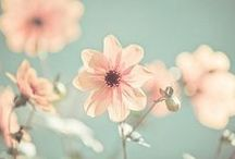 ✿ ALL ABOUT FLOWER / by JANE CHANANTHIDA