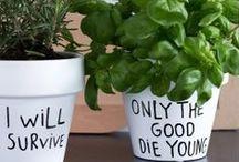 I D E A S - Interiors for my home and garden / interior ideas  garden ideas