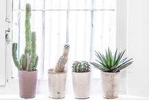 Plants/Garden/Outdoors / by Mara Kofoed