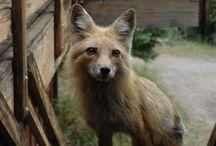 Animal Lover / cute animals
