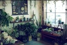 Houseplant Obsession