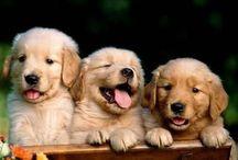 Pups / Awwwwwww / by Ashtyn Fitzsimonds