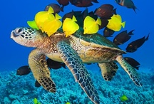 Underwater World... / A whole new world of beautiful, dangerous and unique creatures. / by Susy Lopez ♥♡♥♡♥