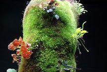 Plant etc / Greens