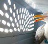 Wildlife Rehabilitation / resources / photos / tips