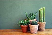 * suculents <3 cactus *