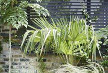 5 /Garden ideas - Fence, Screen, Trellis / by Hellen