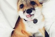 cute ∰