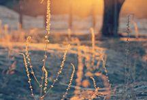 Outdoors / My outdoorsy dreams.