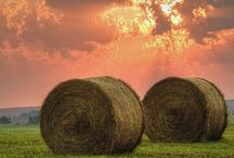 Farm & Country Life / by Joan Ritchie Shoup