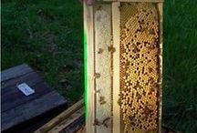 Beekeeping Tips and Tricks
