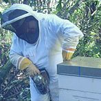 Beekeeping for Beginners / Pins about getting started in the world of Beekeeping.