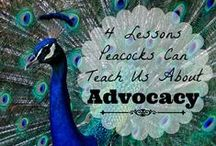 For the Love of Peacocks