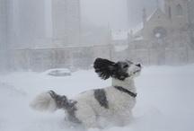 DOGS! / by Rachel Mullen