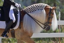 Everything Horses!
