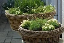 Garden - Vegetables, Herbs, Fruit
