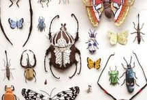 BUGS / I have always loved bugs that are beautiful...