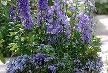 Gardening - Joy!