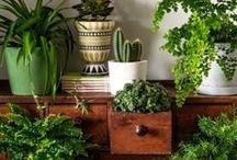 Gardening - Indoor Plants