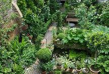 garden / by Anja Wade