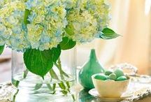 Hydrangeas / Fresh and dried hydrangeas