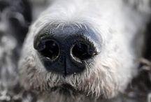 Poodles / by Jan Andrews