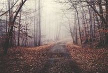 fall / by Anja Wade