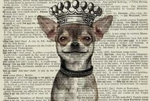 My Bestfriend is a Chihuahua / Chihuahua Love them  the best friend in the world / by Latife Gabrie